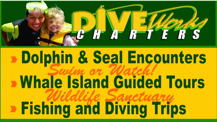 Diveworks Charters Whales and Dolphin Watch - logo