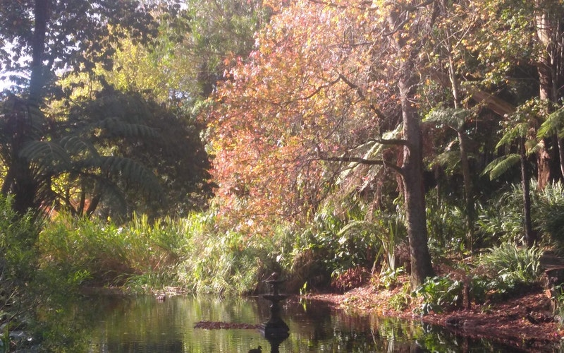 Autumn view of the pond below the cafe.