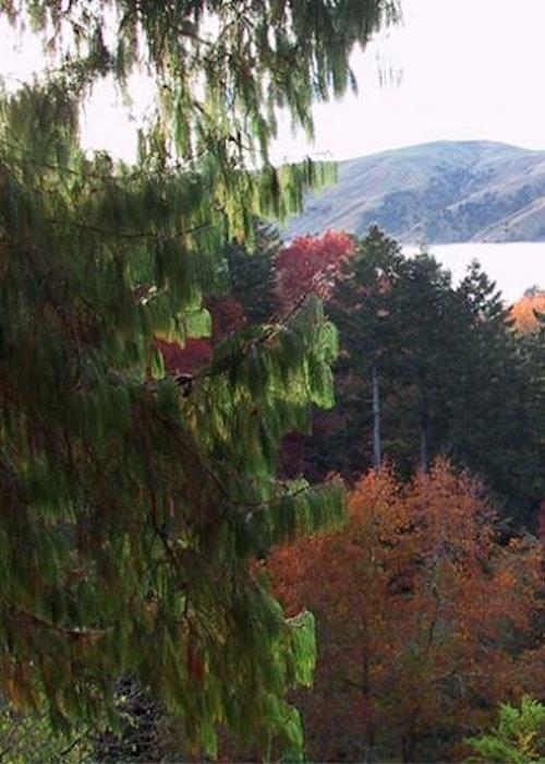Eastwoodhill Arboretum Accommodation