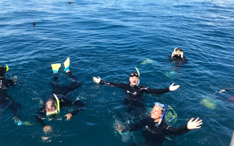 Diveworks Charters - Dolphin and Seal Encounters