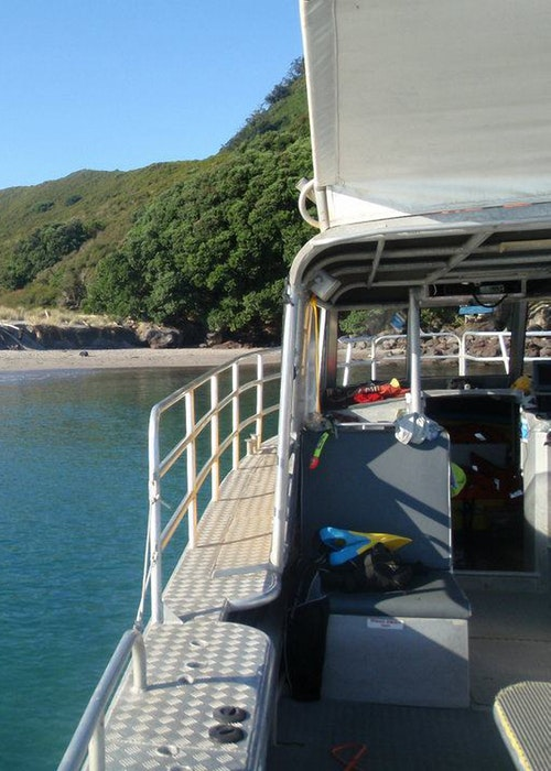 Diveworks Charters - Whale Island Tours