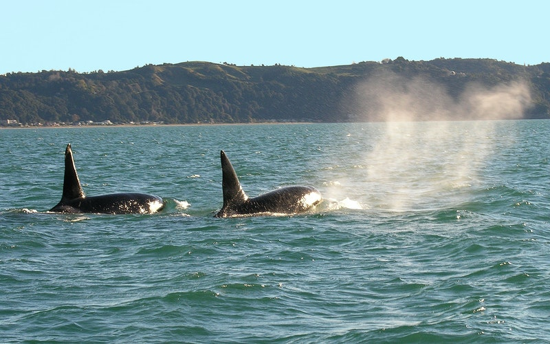 Diveworks Charters Whales and Dolphin Watch