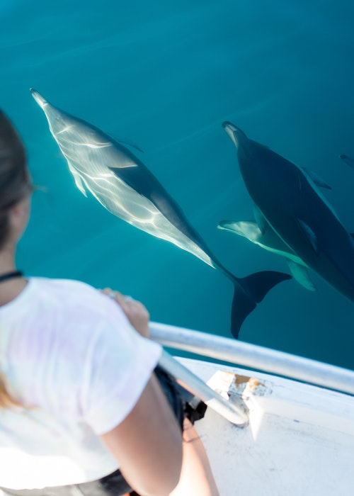Dolphin & Wildlife Cruise - Bay Explorer - Tauranga - Bay of Plenty