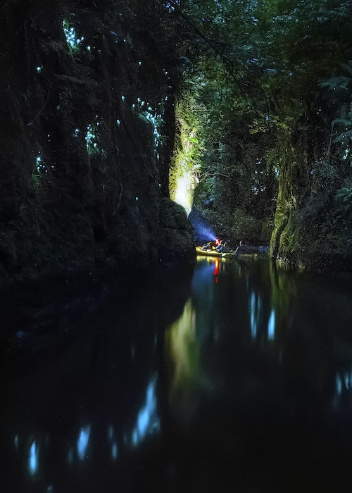 Evening Glow Worm Kayak Tour - Tauranga
