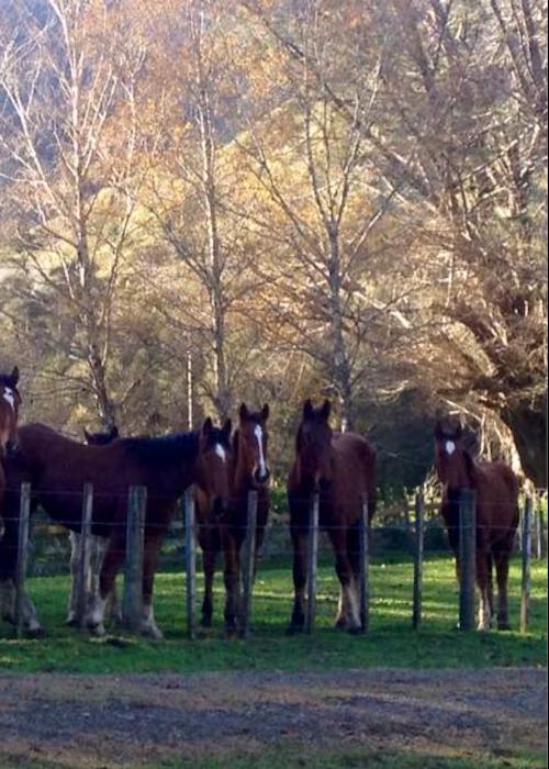 Waikereru Horse Riding Adventures
