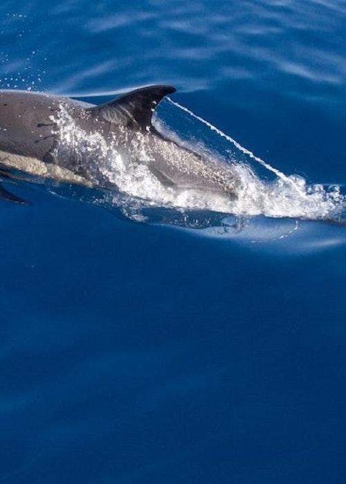 Orca Wild Adventures