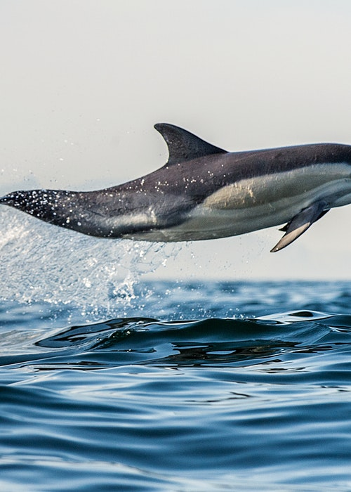 Bay Explorer - Dolphin & Wildlife Cruise